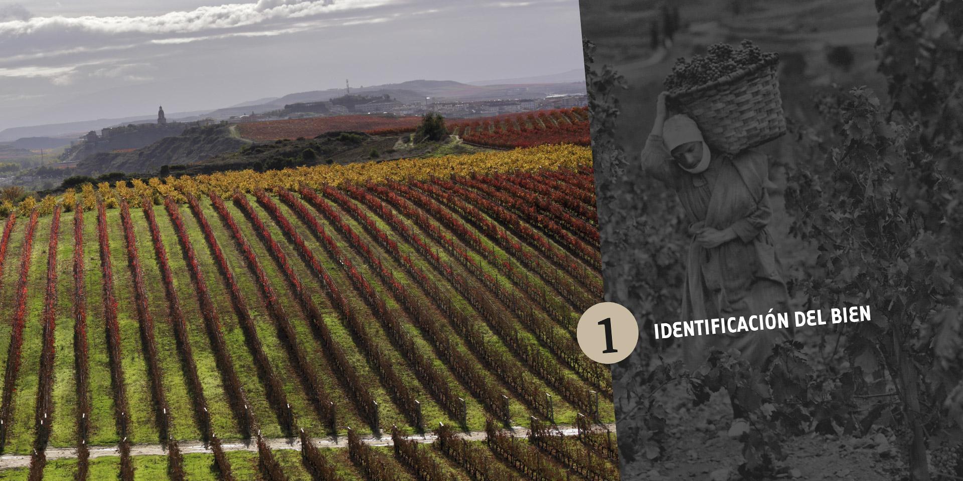 Diseño dossier Paisajes del Vino