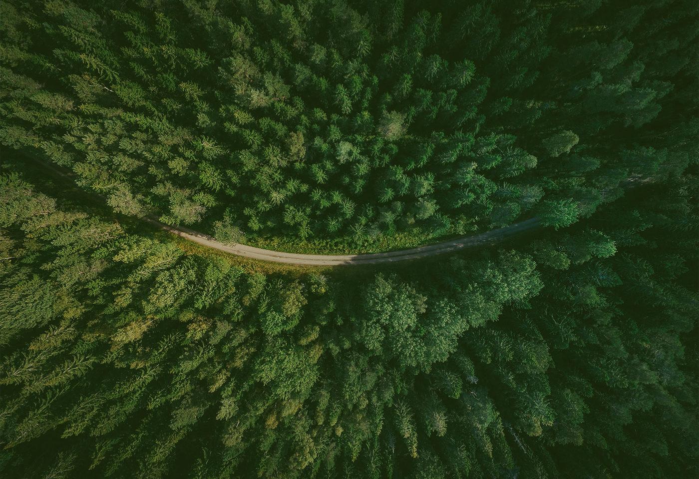 Forest LidaRioja