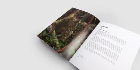 diseno catalogo universo bosque amazonia